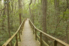 Long Boardwalk Through A Forest Stock Photo
