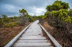 Long Boardwalk Through Marsh Stock Photography