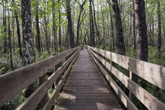 Long Boardwalk At Slough Preserve Stock Photography
