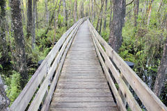 Long Boardwalk At Slough Preserve Stock Photo