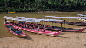 Long boats in rainforest in Taman Negara, Malaysia Royalty Free Stock Photo