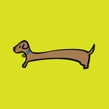 Long body dog Royalty Free Stock Images