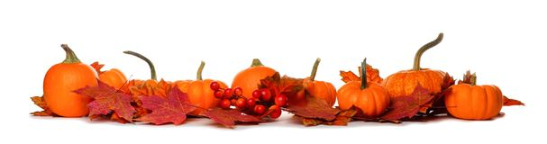 Long border of pumpkins and fall leaves isolated on white. Long border of mini pumpkins and red fall leaves isolated on a white background Royalty Free Stock Image