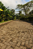 Long brick driveway in a tropical forest Royalty Free Stock Photography