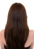 Long Brown Hair. Rear view of female with long brown hair Royalty Free Stock Images