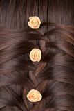 Long Brown Hair Braid. Back View. Royalty Free Stock Photos