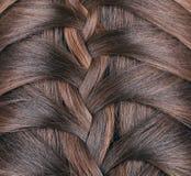 Long Brown Hair Braid. Back View. Stock Photos
