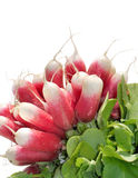 Long bunch of radishes Royalty Free Stock Image