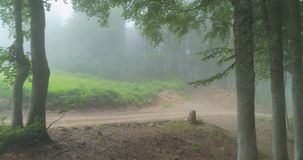 Beautiful Misty Forest stock video footage