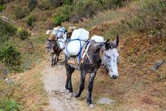 Long caravan of tired laden mules follows the Himalayan path. Nepal, Himalaya royalty free stock photography