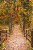 Long chemin à travers la forêt colorée Photographie stock