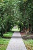 Long chemin dans le jardin image libre de droits