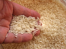 Long classic rice in a hand Royalty Free Stock Image