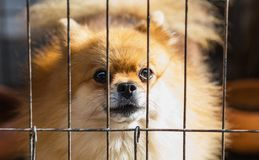 Long-coated Brown Puppy Inside Cage Royalty Free Stock Photo