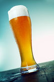 Long cold pint of beer. In an elegant glass with a good head of froth standing on an old wooden counter of a bar or club, low angle view. Look at my portfolio royalty free stock photography