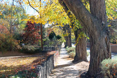 A Long Colorful Sidewalk. A long sidewalk is lined by autumn trees with mulit-colors with a stone wall and grass yards to the side Royalty Free Stock Photography