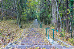 Long concrete stairs in forrest park at autumn covered by colorful leafs Royalty Free Stock Photos
