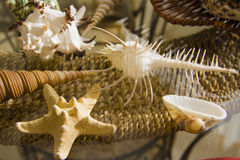 Long conic  Marine shells over straw basket Royalty Free Stock Images
