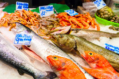 Long counter with various fish and shellfish in market. Barcelona. Royalty Free Stock Image