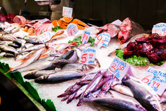 Long counter with various fish and shellfish in market. Barcelona. Royalty Free Stock Photo