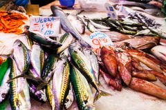 Long counter with various fish and shellfish in market. Barcelona. Stock Photos