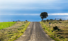 Long Country Road with Markings and Single Tree Stock Photos
