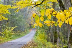 Long countryside road Royalty Free Stock Images