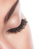 Long curly eyelashes Royalty Free Stock Images