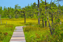 A Long, Curved Boardwalk in a Bog Royalty Free Stock Photography