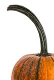 Long Curved Pumpkin Stem Royalty Free Stock Images
