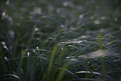 Tall grass in a meadow near a pond royalty free stock photo