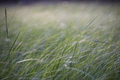 Tall grass in a meadow near a pond stock photo