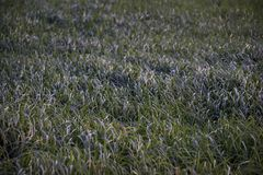 Tall grass in a meadow near a pond stock images