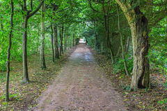 Long dark tree avenue in an old English landscape park with ligh Stock Image