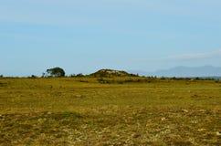 Long deep field near seashore with blue summer sky. Backdrop Royalty Free Stock Photo