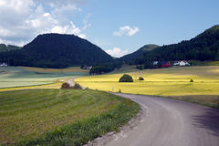 Long dirt road leading into countryside in norway Royalty Free Stock Photo