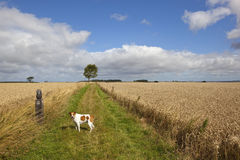 Long distance footpath in summer stock photography