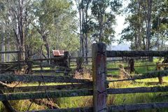 Abandoned Stockyards. Long disused stockyards with fencing and shed. Gum trees and long grass Royalty Free Stock Photo