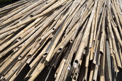 Long dried bamboo Stock Images