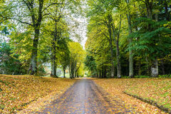 Long Driveway in Autumn. A long driveway at Blair Castle, Scotland with autumn leaves all around Stock Images