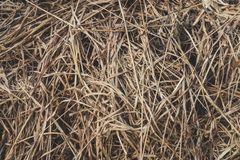 Long dry grass as background. Brown grass. dry hay royalty free stock photo