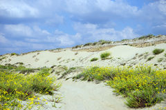 Long dune Royalty Free Stock Photos