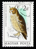 Long-eared owl (Asio otus), series Owls, circa 1984. MOSCOW, RUSSIA - FEBRUARY 19, 2017: A stamp printed in Hungary shows Long-eared owl (Asio otus), series Owls Royalty Free Stock Photos