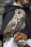 Long-eared owl on man's hand Stock Photos