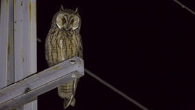 Long-eared Owl at Night Looking Curiously. Long-eared Owl (Asio otus) on a lamppost is looking around amazed at night Royalty Free Stock Photos