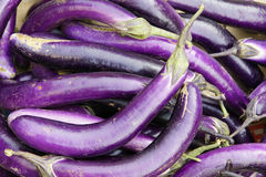 Long eggplant. The background of long eggplant royalty free stock photo