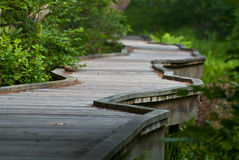A Long Elevated Walkway in the Forest Royalty Free Stock Photography