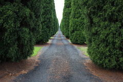 Long empty driveway to Australian farm. A long tree-lined driveway leading into an agricultuiral property in Australia Stock Images