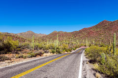 A long empty road leads through the Saguaro National Park Stock Image