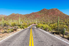 A long empty road leads through the Saguaro National Park. Saguaro cactus (Carnegiea gigantea) in the Saguaro National Park, Arizona, USA Royalty Free Stock Photo